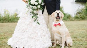 wedding-dog-sitter-cani-matrimonio3-720x400