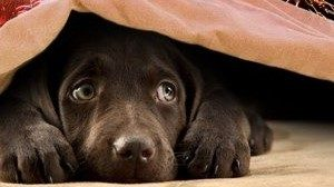 cane paura